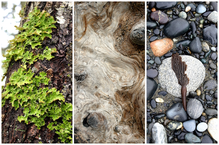 Beautiful details. Moss, wood, algae on rocks